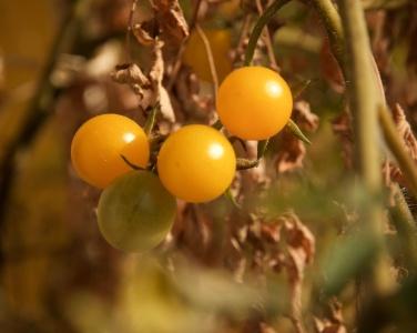 TomatenBohnenSuppe3